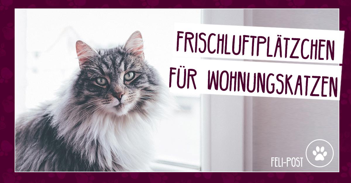 Frischluftplatzchen Fur Wohnungskatzen Magazin