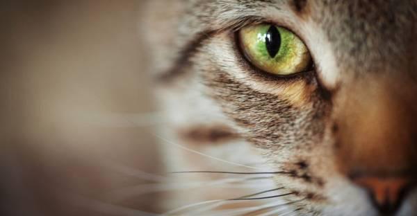 FeliFine-BARF-Onlineshop-Wie-sehen-Katzen