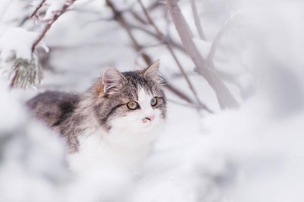 cat-1861841_1920