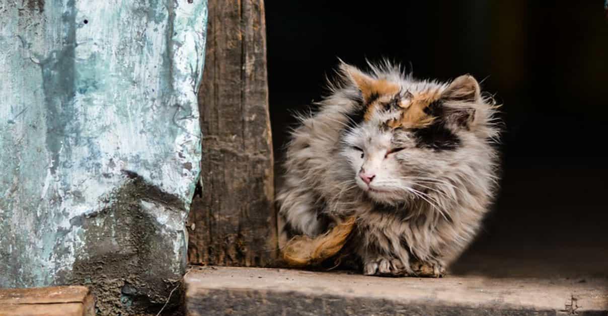 Streunerkatzen